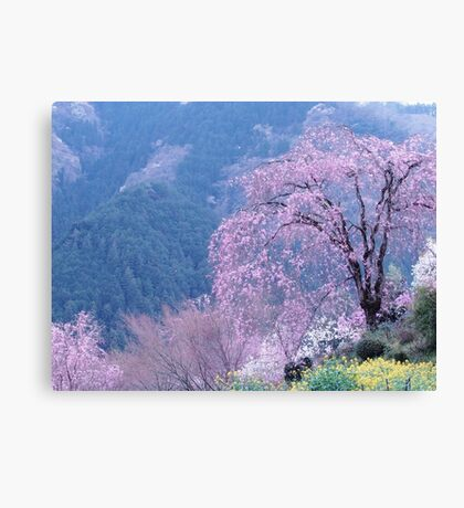 By The Cherry Blossom Tree Canvas Print