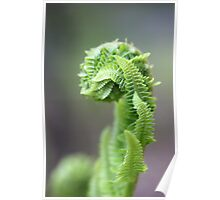 Young Fern 1 Poster