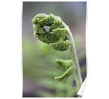 Young Fern 2 Poster