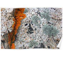 Acadia Granite 1 Poster