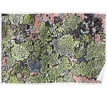 Acadia Granite 13 Poster