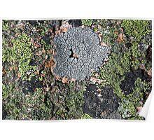 Acadia Granite 18 Poster