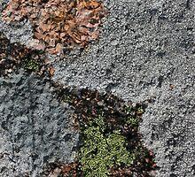 Acadia Granite 24 by marybedy