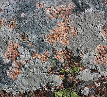 Acadia Granite 25 by marybedy