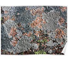 Acadia Granite 25 Poster