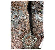Acadia Granite 26 Poster
