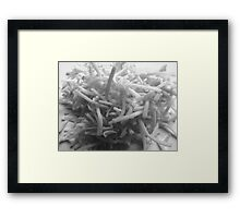 Play With Your Food - Shredded Cheese Framed Print