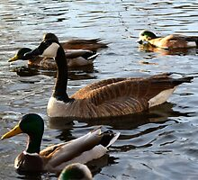 Ducks by LyKi
