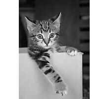 Kitten in a box 3 Photographic Print