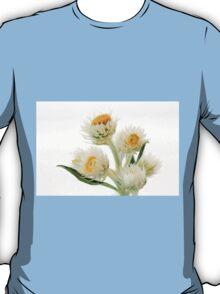 Helichrysium Elatum - White Paper Daisy T-Shirt