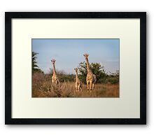 Leaning Towers of Critter Framed Print