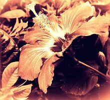 Dark Peach Vintage Hibiscus by PiscesAngel17