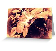 Dark Peach Vintage Hibiscus Greeting Card
