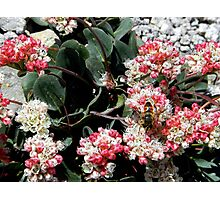 Japanese blossoms Photographic Print