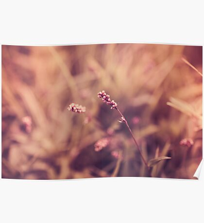Calming Flowers  Poster