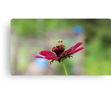 Hoverfly on a Flower Canvas Print