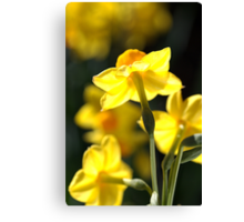 Glowing Lights - Jonquils Canvas Print