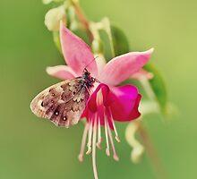 Pink Fuchsia by JBlaminsky