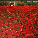 Sea of Poppies by Sally Ford