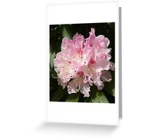 Rhododendrum Flower Card Greeting Card