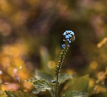 Little Blue Flowers by alyphoto