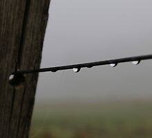 water on a wire by Brian Northern