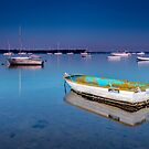 Electric Blue - Victoria Point Qld Australia by Beth  Wode