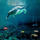 Green Sea Turtle by Leanne Kelly