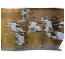 Golden Egrets  Poster