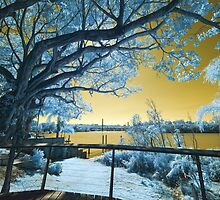 The Fig Tree and the Eleanor Schonell Bridge by Mel Brackstone