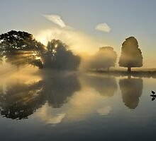 Bushy Park at Sunrise by Kasia Nowak