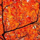 Glorious Autumn by Silken Photography