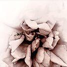 The Heart Remembers by LouiseK