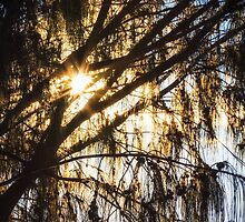 Dawn Sunlight Burst by Silken Photography