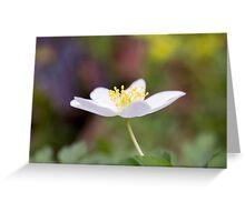 Wood Anemone Greeting Card