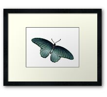 Real Butterfly No. 5 - Metallic Blue-Green Framed Print