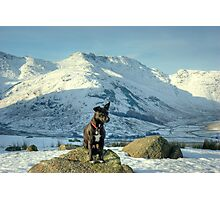 Tarn the Terrier... By Bow Fell Photographic Print