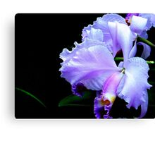 The Mystery of an Orchid Canvas Print