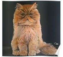 Ginger / Marmalade cat Poster