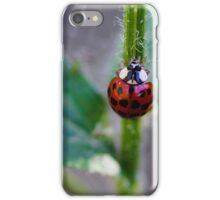 Ladybug Climbing up a Stem iPhone Case/Skin