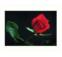 Rose Note Card Art Print