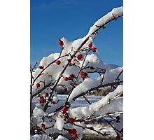 Rose Hips On Ice Photographic Print