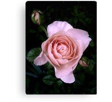 Ambridge Rose Canvas Print