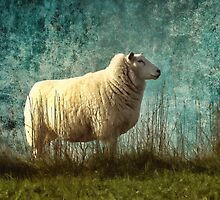 Vintage sheep by shalisa