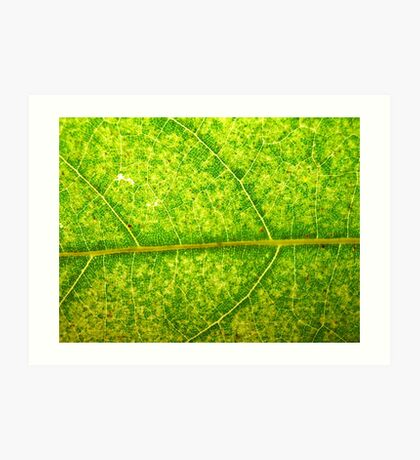 Macro Leaf No 4 Art Print