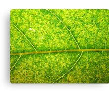 Macro Leaf No 4 Canvas Print