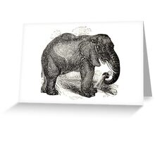 Vintage Elephant Illustration (1891) Greeting Card