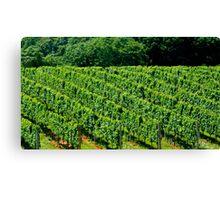 Summer Vineyard - 2    ^ Canvas Print