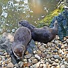 Otter twins by shalisa