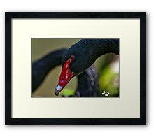 BLACK SWAN CLOSE UP Framed Print
